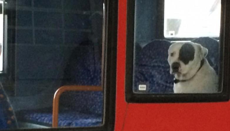 Общество: Владельцев пса, «брошенного» в автобусе, наконец-то нашли