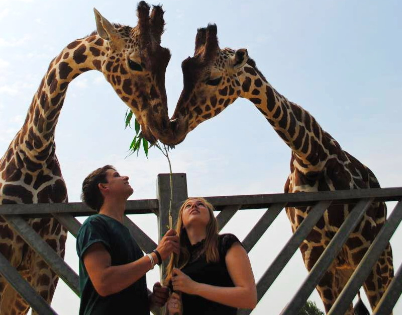 colchester-zoo