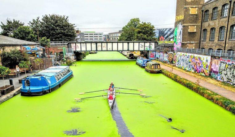 Происшествия: Некоторые каналы Лондона стали ярко-зелеными