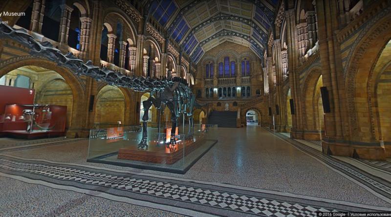 Досуг: Теперь вы можете исследовать Музей естественной истории с помощью Google Street View