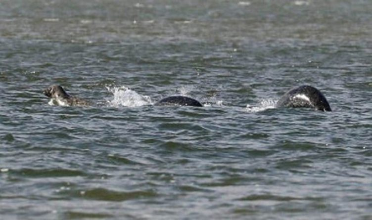 Без рубрики: Лохнесское чудовище или резвящиеся тюлени?