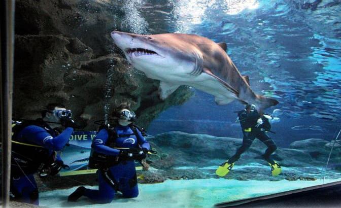 Shark-Dive-Resize