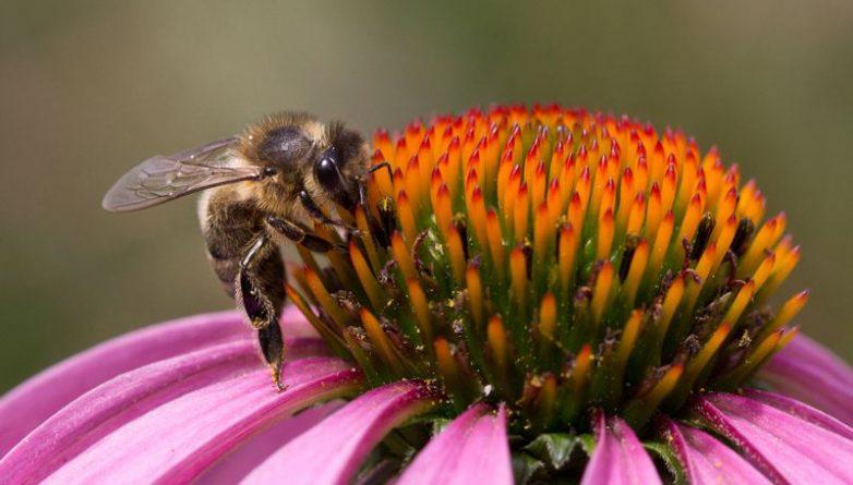 Общество: В Британии появился новый вид пчел
