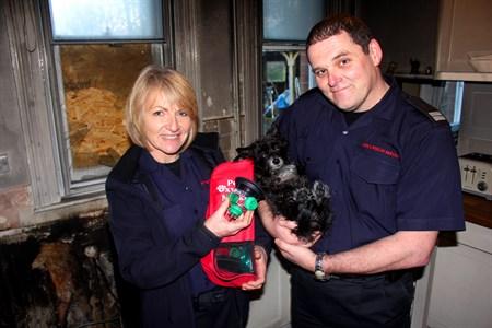 Собачка Мэгги и пожарные из Faversham