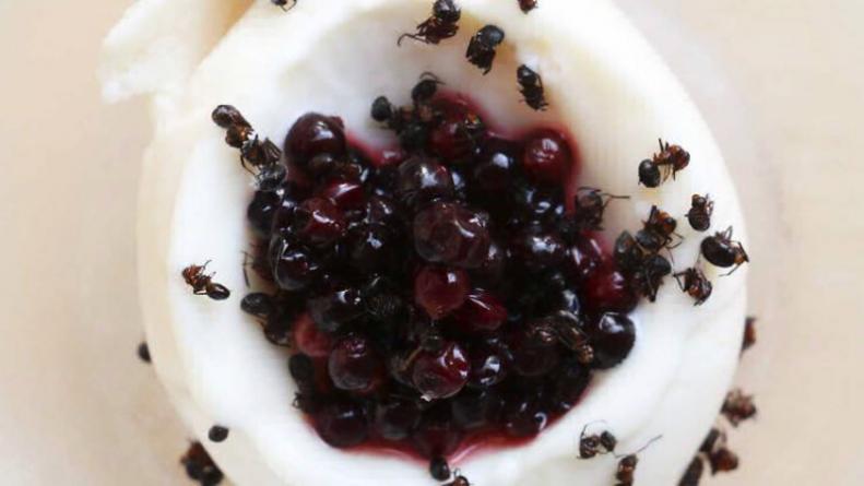 Досуг: В Лондоне можно теперь попробовать мороженое со вкусом картошки и муравьиный сорбет