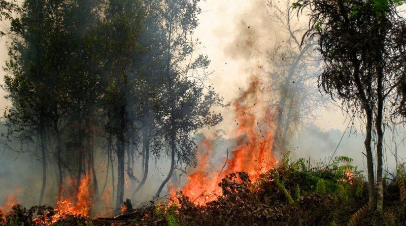 В мире: 39 человек погибли в лесных пожарах Португалии
