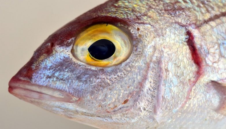 fish-2389131_1280