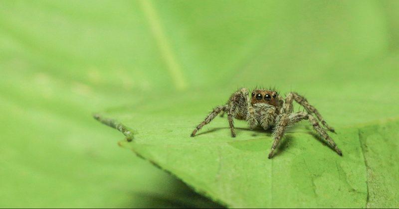 Лайфхаки и советы: Обнаружена столица пауков в Великобритании