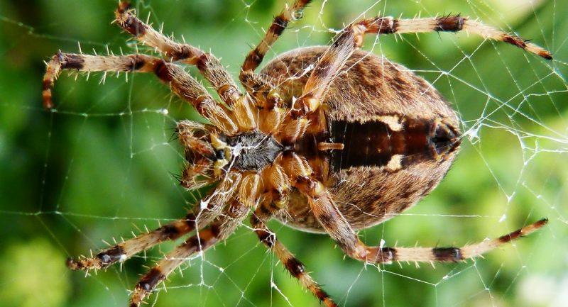 Происшествия: Британцев ждет нашествие озабоченных пауков