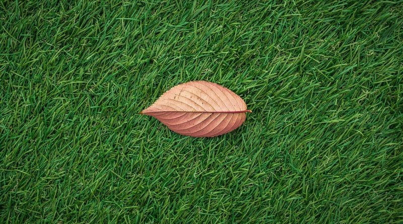 leaves-1822976_1280