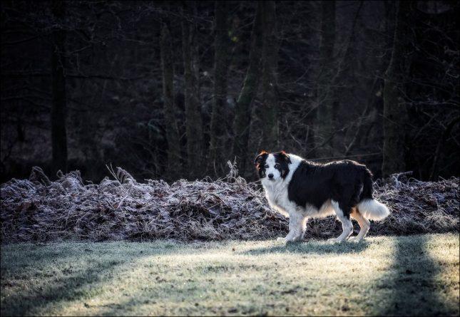 Происшествия: На площадке для выгула собак в Суссексе обнаружен крысиный яд