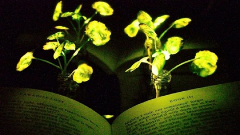 Streetlights could be replaced by glowing trees, after scientist