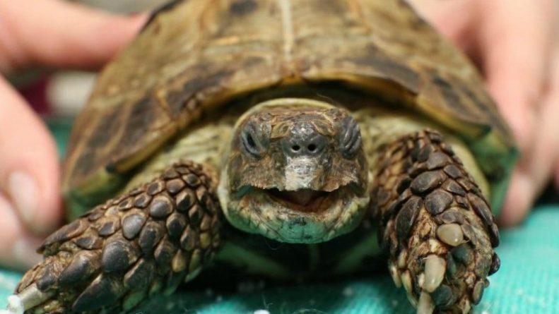 Популярное: Черепаха сбежала от хозяйки, но была найдена через полгода в 300 метрах от дома