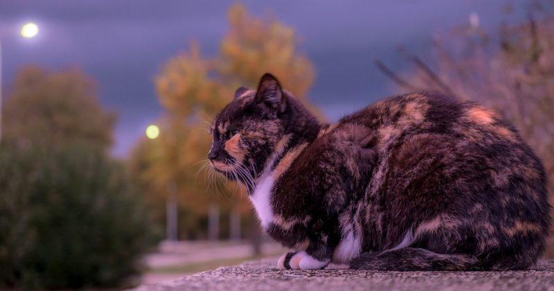 cat-3006960_1280