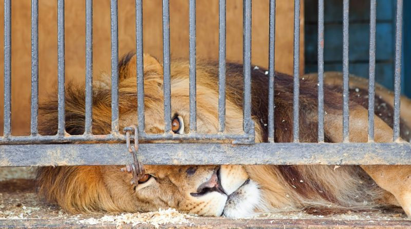 Wild Animals In Travelling Circuses
