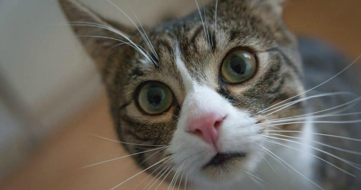 https://www.pexels.com/photo/adorable-animal-animal-photography-big-eyes-225406/