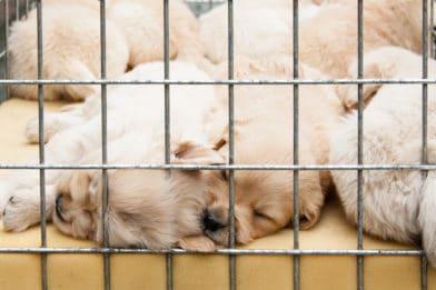 щенки в клетке