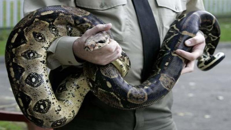 Офицер со змеей