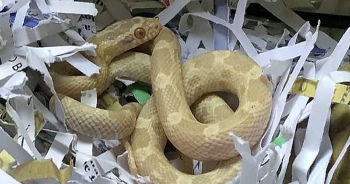 Покупатель был шокирован, когда купил в Argos чайник, а внутри обнаружил еще и бонус…живую змею
