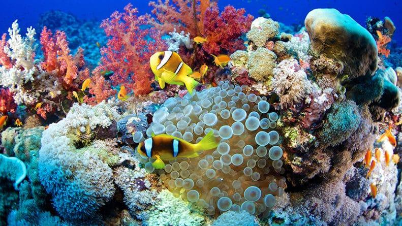 Общество: «Заглянуть в будущее»: учёные обнаружили разновидность кораллов, устойчивых к глобальному потеплению