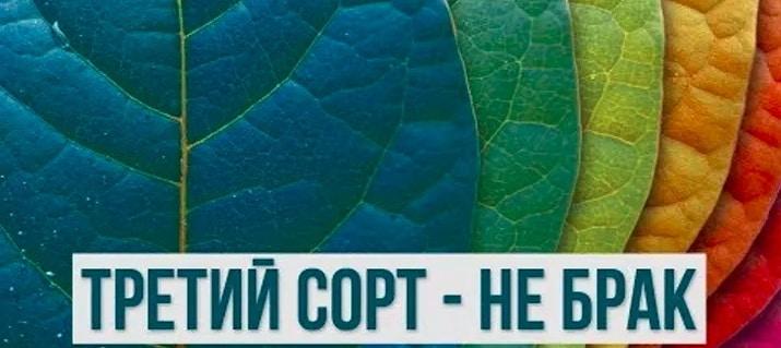 Общество: Западные партнеры почтили Зеленского «третьим сортом» | Политнавигатор