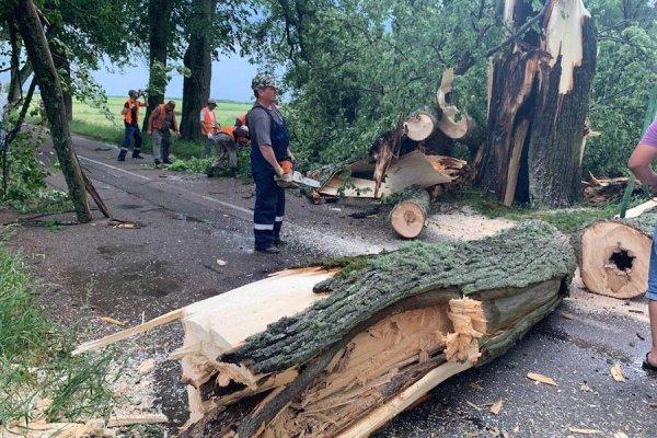 Без рубрики: Под Правдинском на трассу упали два дерева (фото)