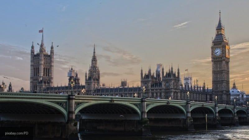 Ученые Великобритании бьют тревогу в ожидании гигантских шершней