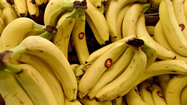 Общество: Опасный грибок может привести к мировому дефициту бананов