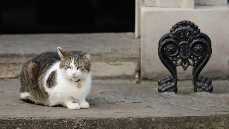 Общество: Кот британских премьеров Ларри отказался дружить с группой детей