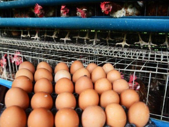 Общество: Известный врач высмеял диетолога Минздрава за слова об опасности яиц