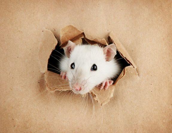 Общество: Пенсионерка застряла за шкафом в поисках мыши и умерла