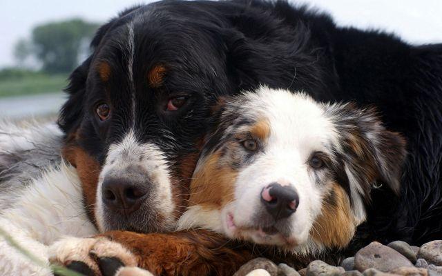 Общество: Собаки понимают слова человека гораздо лучше, чем считали ученые