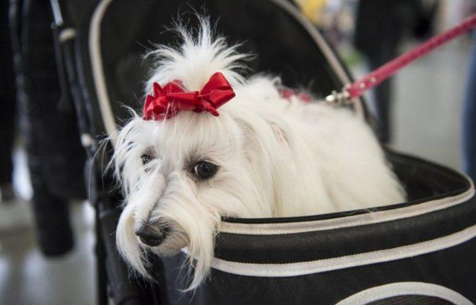 Общество: Пёс, катающий кота на санках, покорил Интернет
