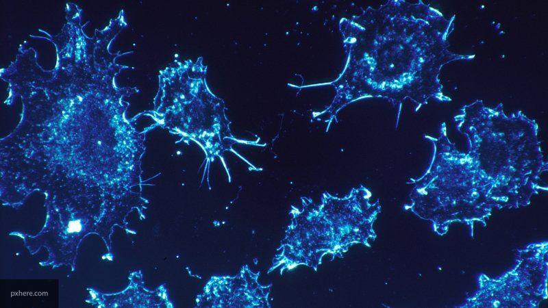 Мешающую иммунитету бороться с раком молекулу нашли в организме человека