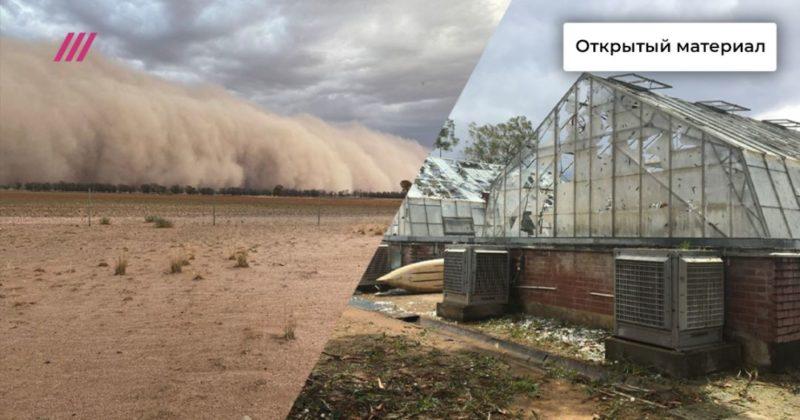 Общество: Апокалипсис в Австралии. На страдающий от пожаров материк обрушились ливни, град и пыльные бури.