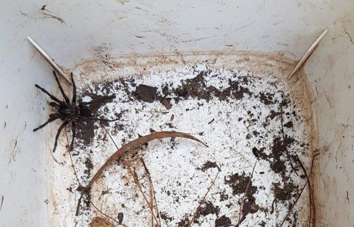 Общество: Ядовитые пауки активизировались в Австралии