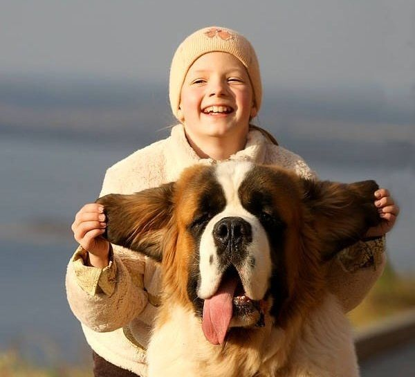 ТОП-5 гигантских пород собак с покладистым характером - today.ua