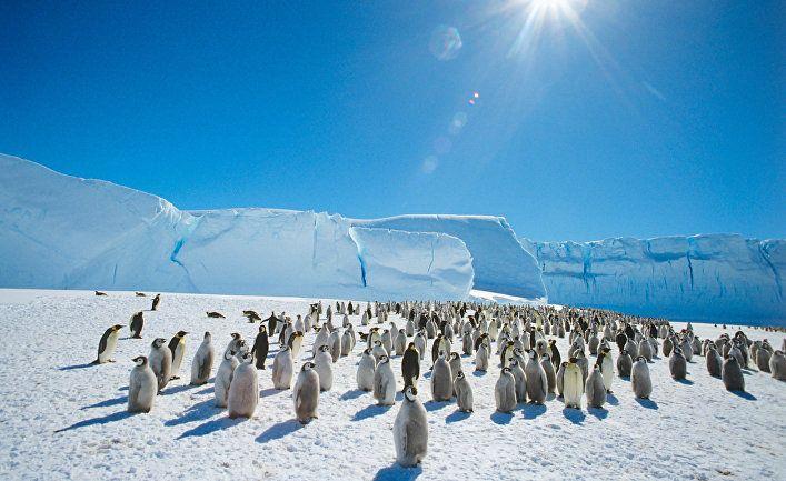 Общество: The Washington Post (США): температура в Антарктиде поднялась до 20 градусов, побив рекорд, зафиксированный несколькими днями ранее