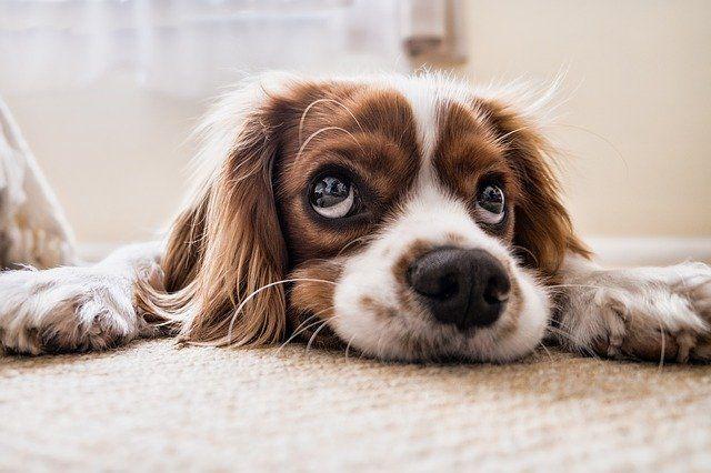 Общество: Просидевшая десять лет в приюте собака наконец обрела хозяев - Cursorinfo: главные новости Израиля