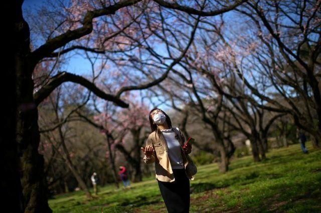 Общество: Коронавирус коронавирусом, а весна по расписанию: люди по всему миру наслаждаются цветением вишен (ФОТО)