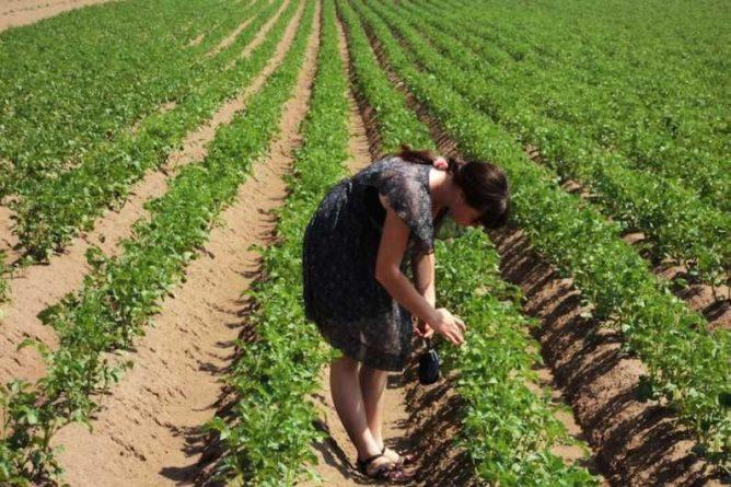 Общество: ООН: миру грозит голод из-за коронавируса