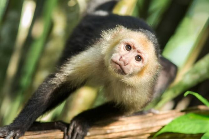 Общество: В Индии обезьяны украли анализы крови для тестов на COVID-19 - Cursorinfo: главные новости Израиля