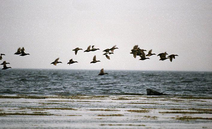 Общество: Из Белого моря в Балтийское: путешествие пессимиста и оптимиста (Suomen Kuvalehti, Финляндия)