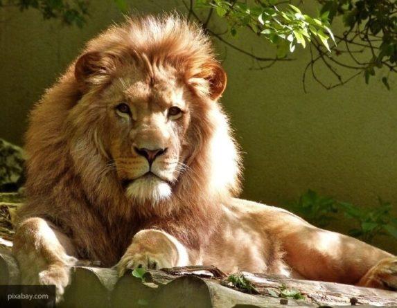 Общество: Зоопарки в Англии вновь откроются 15 июня