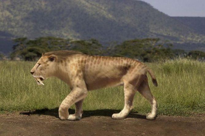 Общество: Учёные: Саблезубые сумчатые тигры могли не быть жестокими, употребляя мягкую пищу