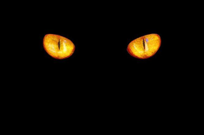 "Общество: Жительница Великобритании сняла на видео ""кота-призрака"""