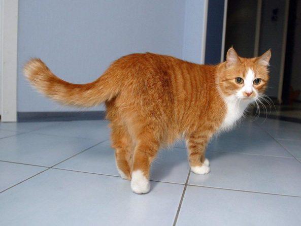 Общество: В Великобритании у кота обнаружили коронавирус
