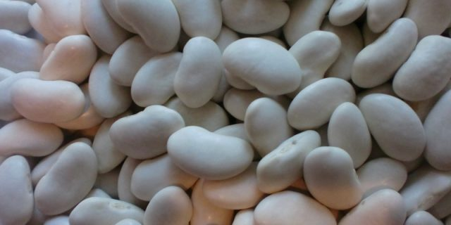 Bulk sell beans from Kyrgyzstan